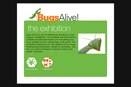 Bugs Alive exhibition